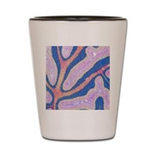 Cerebellum structure, light micrograph Shot Glass