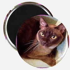 Champagne Burmese Box Cat Magnet