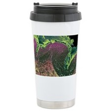 Coloured SEM of a section throu Travel Mug