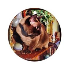 Tonkinese on Mantle Round Ornament