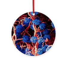Coloured SEM of glomeruli in the hu Round Ornament