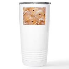 Compact bone Travel Mug