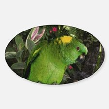 Yellow Nape Amazon Parrot Sticker (Oval)