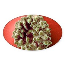Crenated red blood cell, SEM Decal