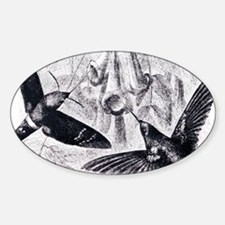 Convergent evolution Sticker (Oval)