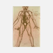 Drawing of human venous system (L Rectangle Magnet