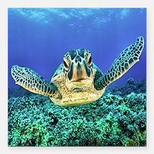 """aquatic sea turtle Square Car Magnet 3"""" x 3"""""""