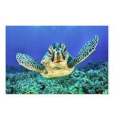 aquatic sea turtle Postcards (Package of 8)