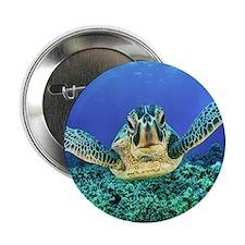 "aquatic sea turtle 2.25"" Button"