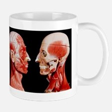 Facial muscles seen on the heads of mod Mug