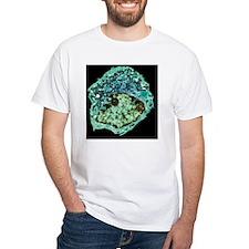 p7500106 Shirt