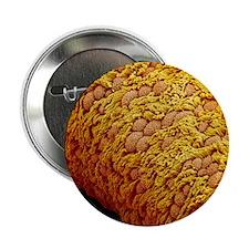 "Fallopian tube 2.25"" Button"