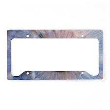 p4200333 License Plate Holder