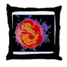 p2480060 Throw Pillow
