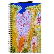 False-colour TEM of a duodenal goblet cell Journal