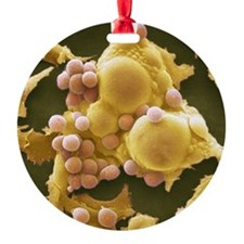 Fat cells, SEM Ornament