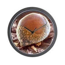 Fat cell, SEM Wall Clock