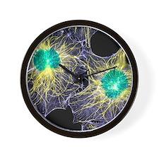 Fibroblast cells showing cytoskeleton Wall Clock