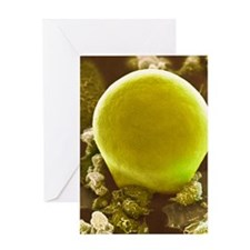 Fat cell, SEM Greeting Card