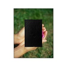 Flower held in hands Picture Frame