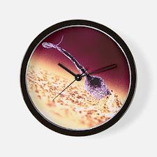 Fertilisation, computer artwork Wall Clock