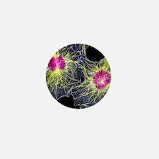 Fibroblast cells showing cytoskeleton Mini Button