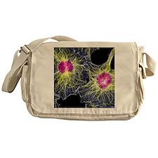 Fibroblast cells showing cytoskeleto Messenger Bag