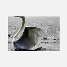 Swan Calendar January Rectangle Magnet