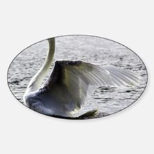 Swan Calendar January Sticker (Oval)