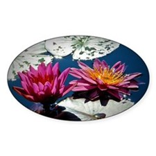 Water lilies Decal