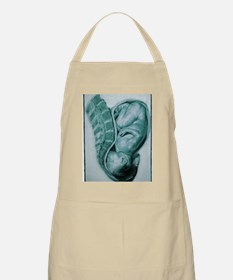 Full-term foetus at 40 weeks Apron
