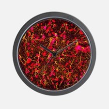 Glial cells Wall Clock