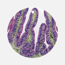 Gall bladder surface, light microgr Round Ornament