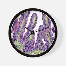 Gall bladder surface, light micrograph Wall Clock