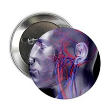 "Head blood vessels 2.25"" Button"