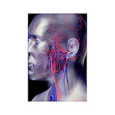 Head blood vessels Rectangle Magnet