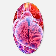 Heart and red blood cells, artwork Decal