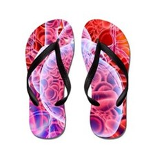 Heart and red blood cells, artwork Flip Flops