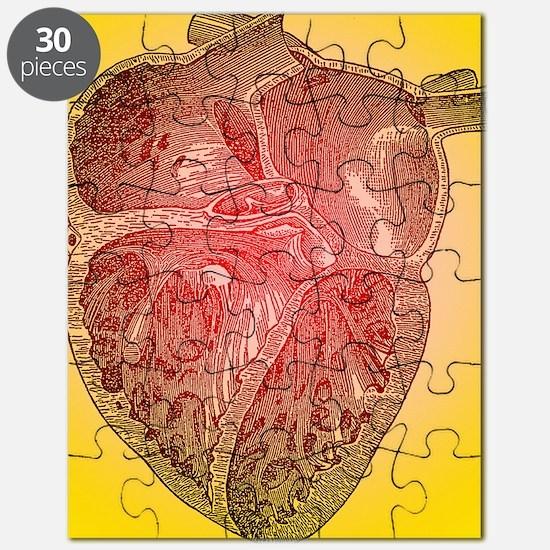 Heart anatomy Puzzle