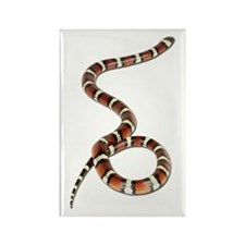 Milk Snake Photo Rectangle Magnet