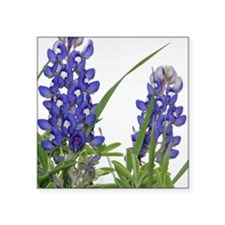 "Texas bluebonnet keychain Square Sticker 3"" x 3"""