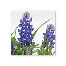 "Texas bluebonnet circle cha Square Sticker 3"" x 3"""