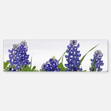 Texas Bluebonnets Bumper Bumper Sticker