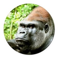 Earnie Silverback gorilla looking Round Car Magnet