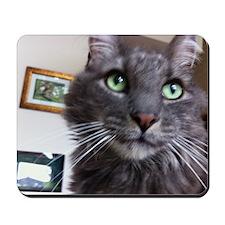 Wistful cat Mousepad