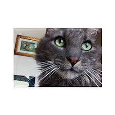 Wistful cat Rectangle Magnet
