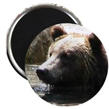 ALERT GRIZZLY BEAR Magnet