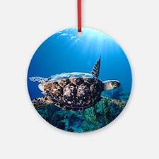 A turtle in the sun Round Ornament