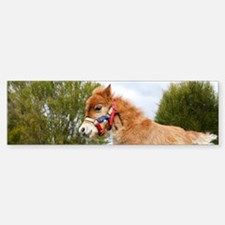 Orhaned Foal - Joy Bumper Bumper Sticker