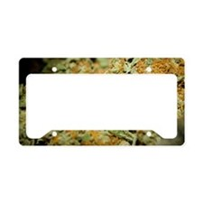 Cannabis License Plate Holder